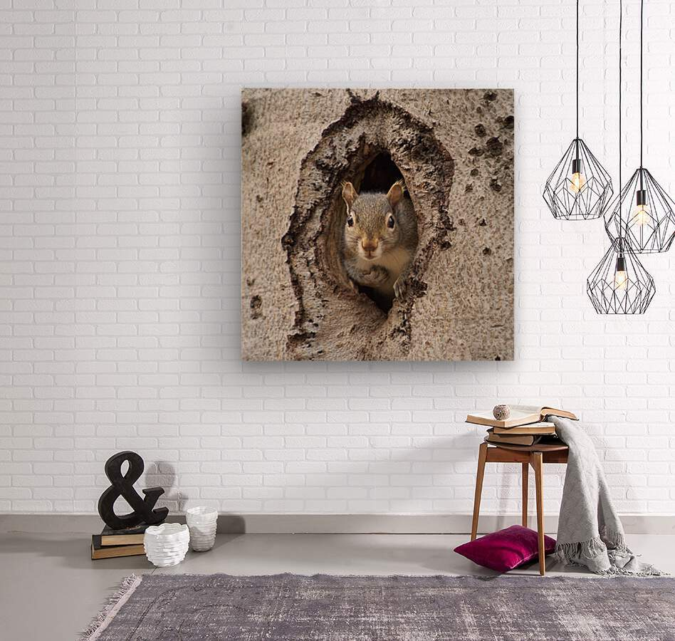 Squirrel in tree hole  Wood print