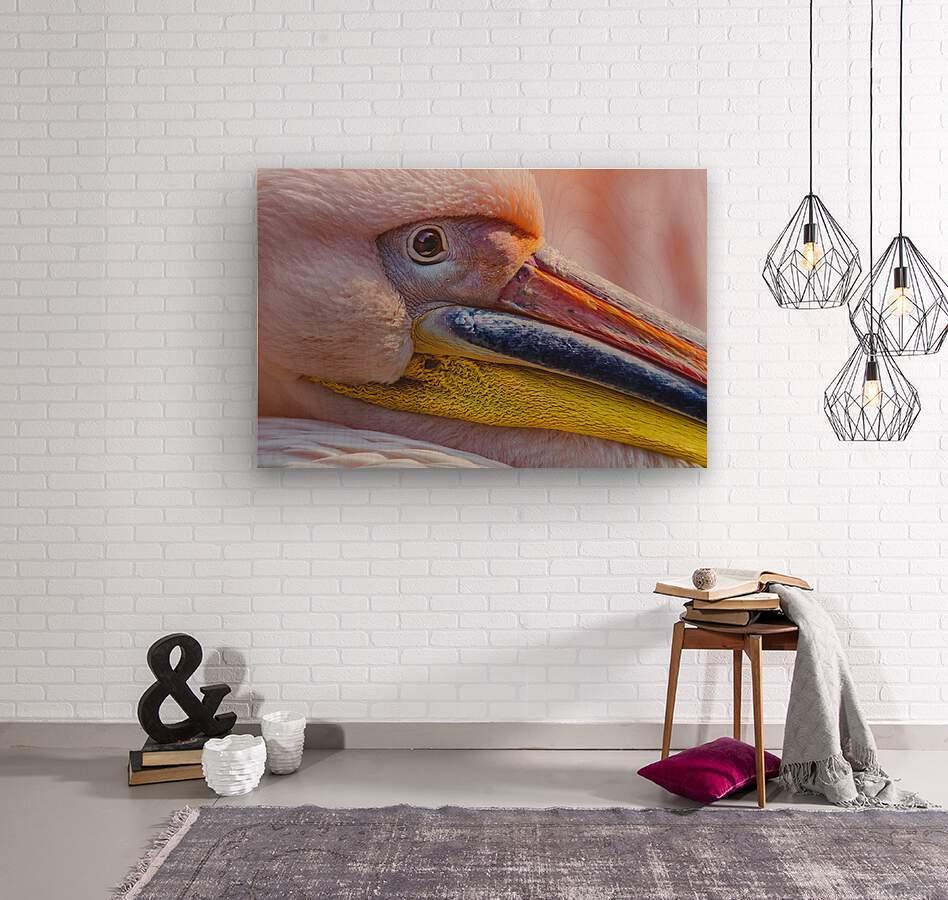 Pelican portrait  Wood print