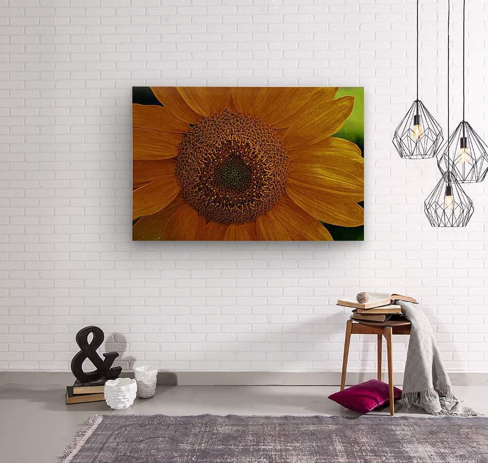 Enhanced Sunflower  Wood print