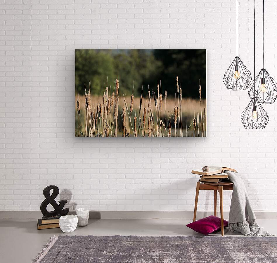 Cat Tails in Spring  Wood print
