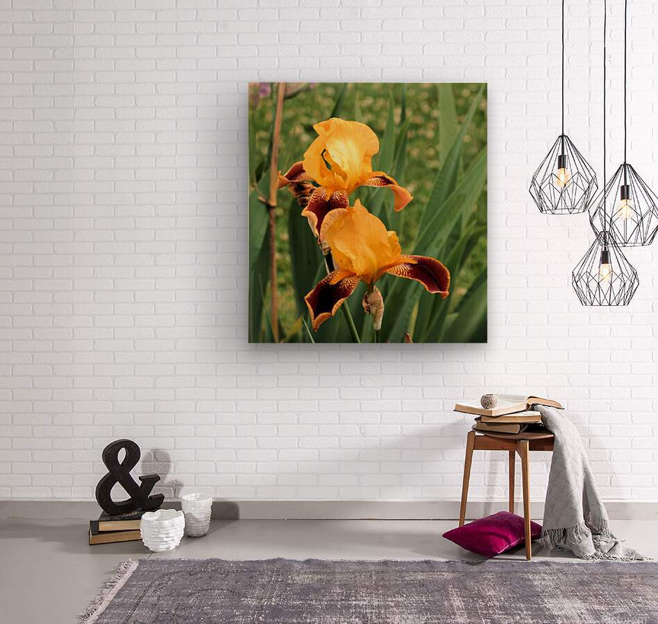 Yellow Brown Iris  Wood print