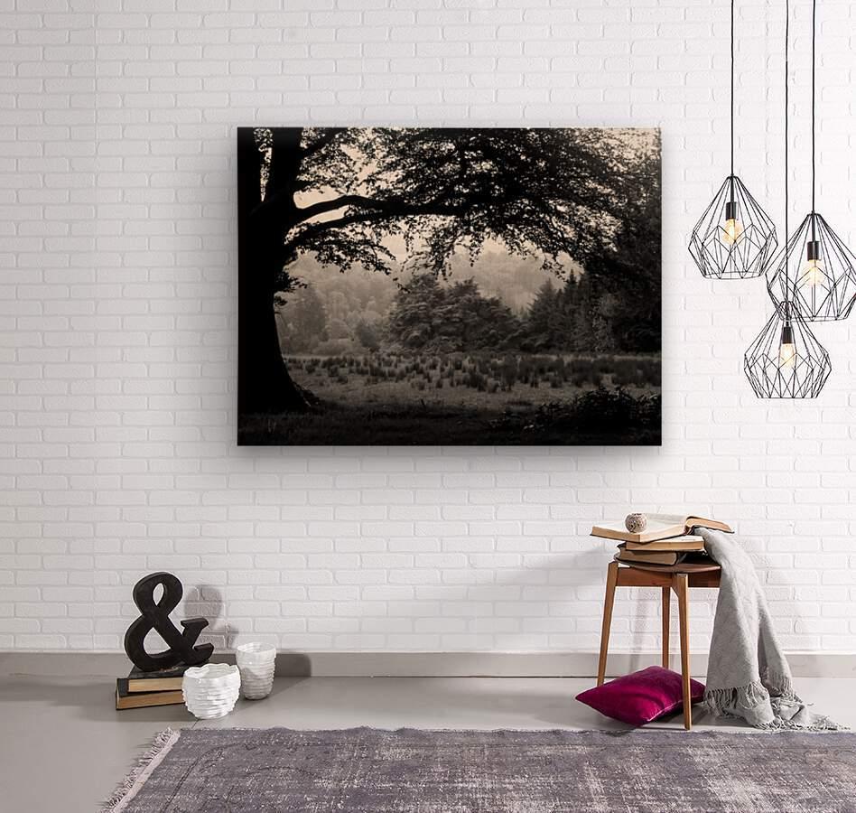 Black and White Field  Wood print