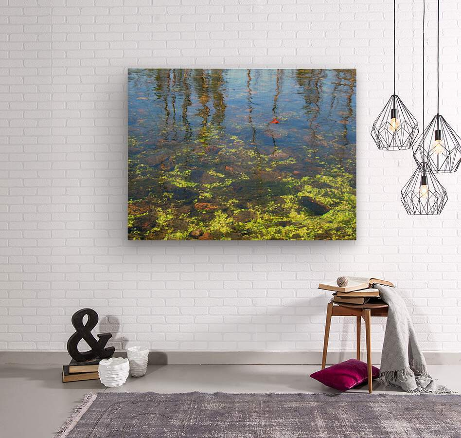 Dragonfly on the Madison  Wood print