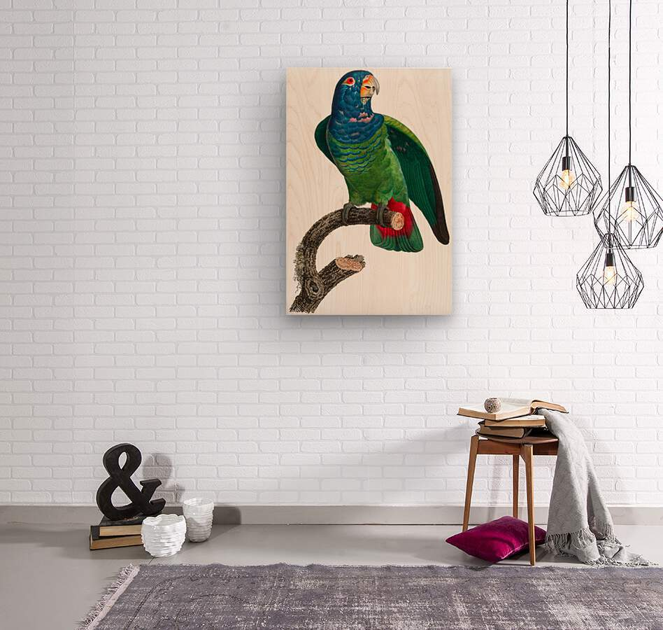 Parrot Print Antique Space Painting Vintage Drawing Poster Wall Art vintage animal parrot photo Tropical Parrot Art   Wood print