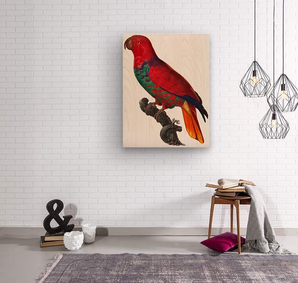 Parrot Print Antique Space Painting Vintage Drawing Poster Wall Art Eclectus Parrot Vintage parrot print Parrot Poster Print   Wood print