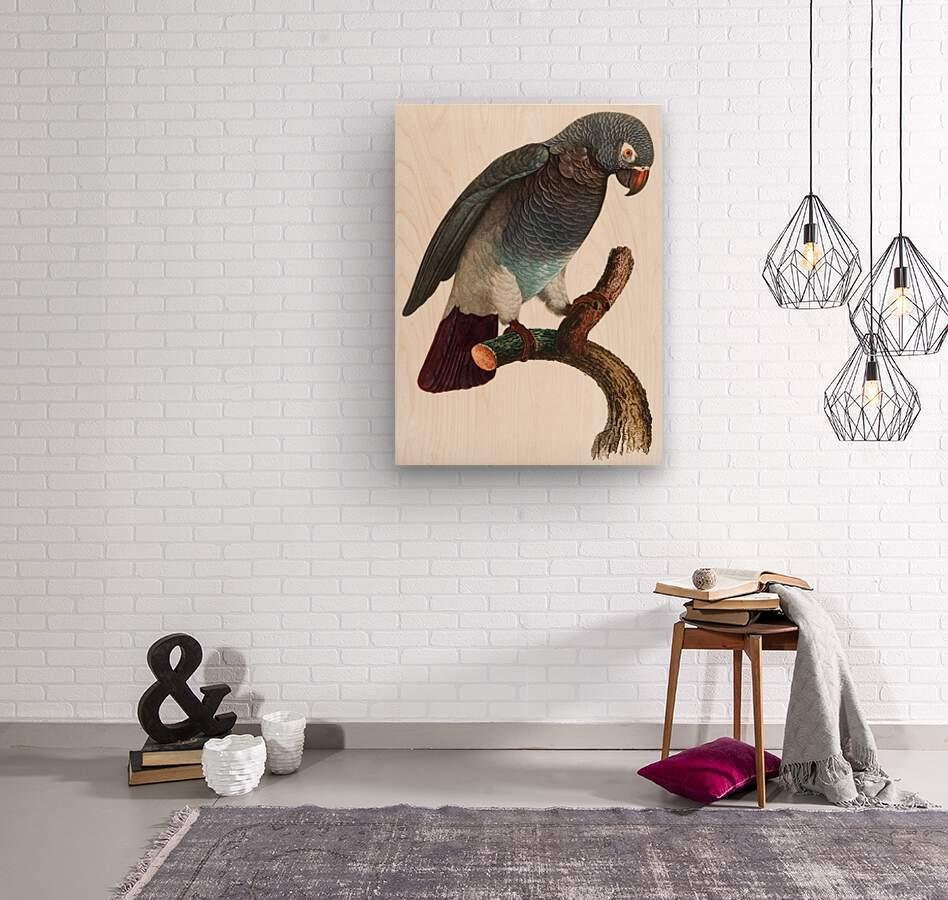 Macaw - Birds - Paradise - Tropical- Art Print - Wall Art - Parrot  Wood print