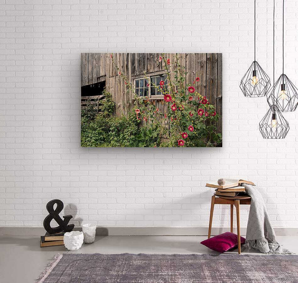 Roses tremieres embellies par une vieille grange - Hollyhocks embellished by an old barn  Wood print