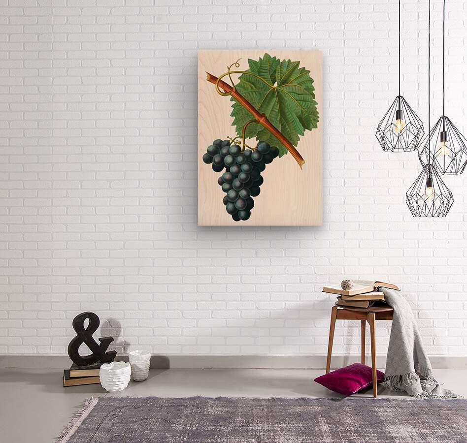 Grape Spanna Antique Art Kitchen Art Grapes Vintage Grapes Pic Grape Vine Grape Leaves Winery Spanna Grapes Wine Blued 02Element 3  Wood print