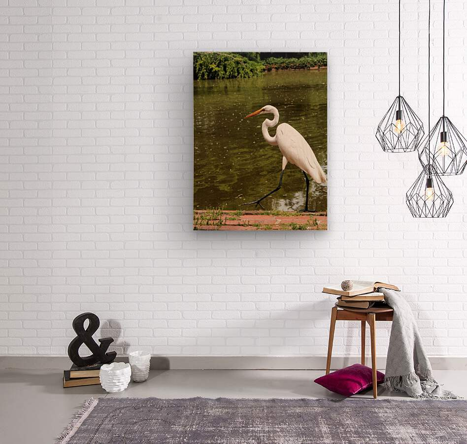 Strutting Egret  Wood print