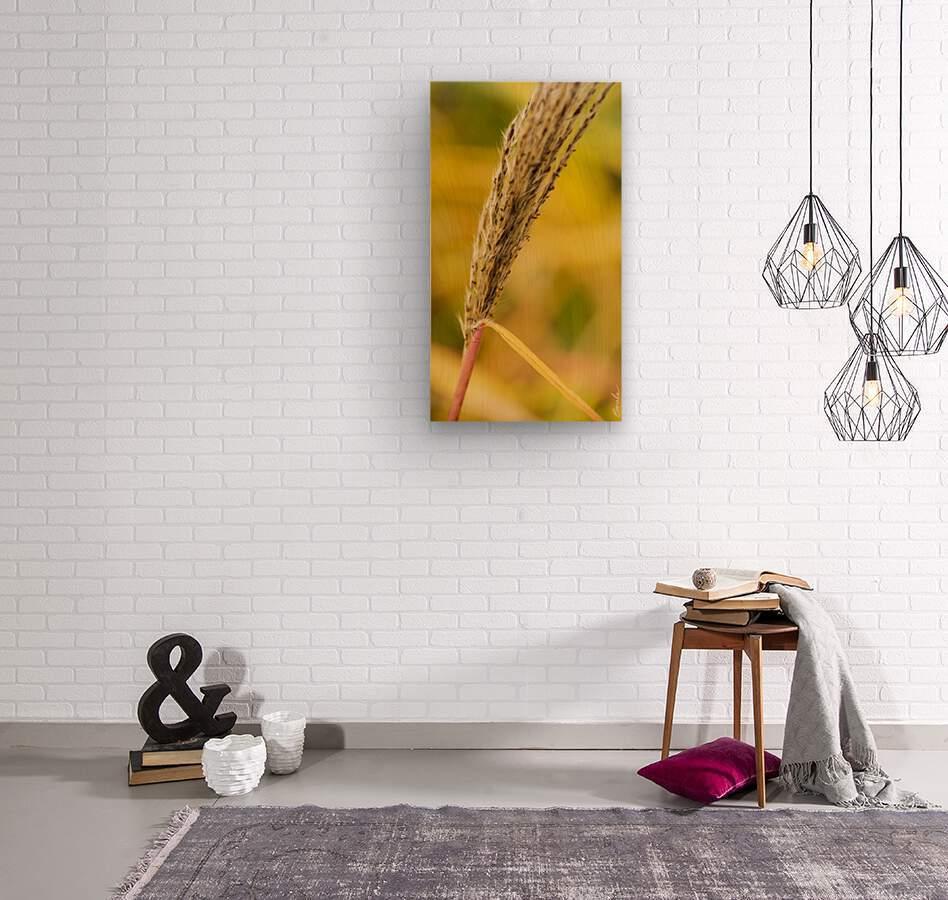 Flamboyantes Graminees no. 6 - Flamboyant Grasses no. 6  Impression sur bois
