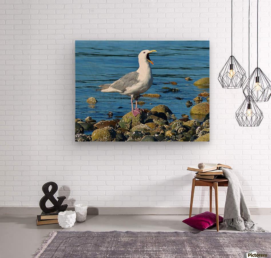 Yawning Gull  Wood print