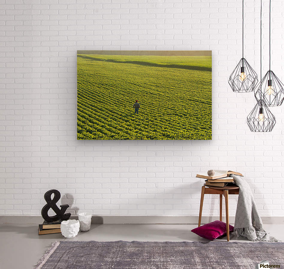 Portrait of a farmer walking through a large green soybean field in central Iowa in summer; Iowa, United States of America  Wood print