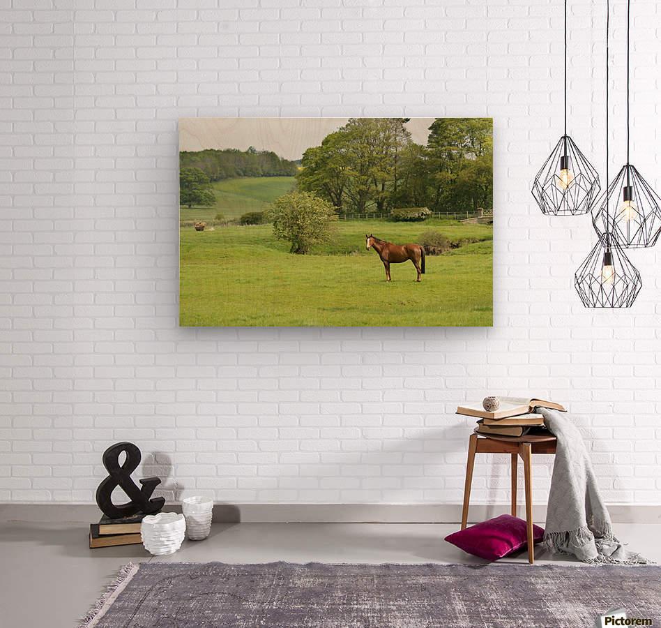 Horse in field; Morpeth, Northumberland, England  Wood print