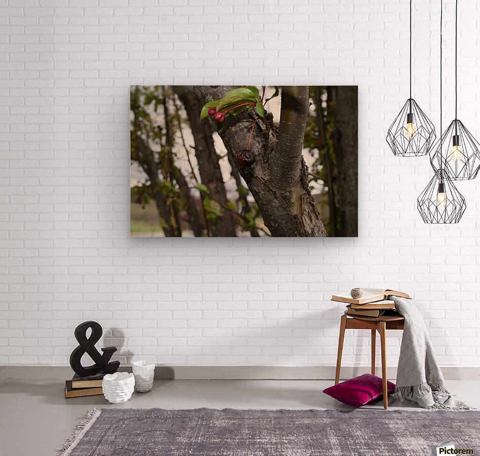 Rotten Berry   Wood print