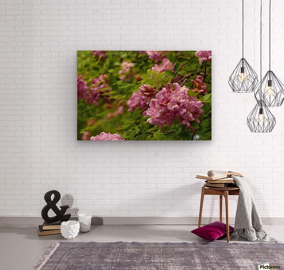 Rose Acacia Blossoms  Wood print