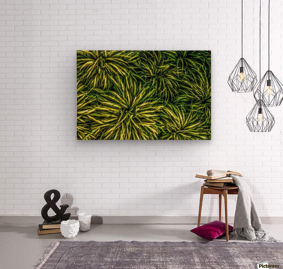 Green Chaos  Wood print