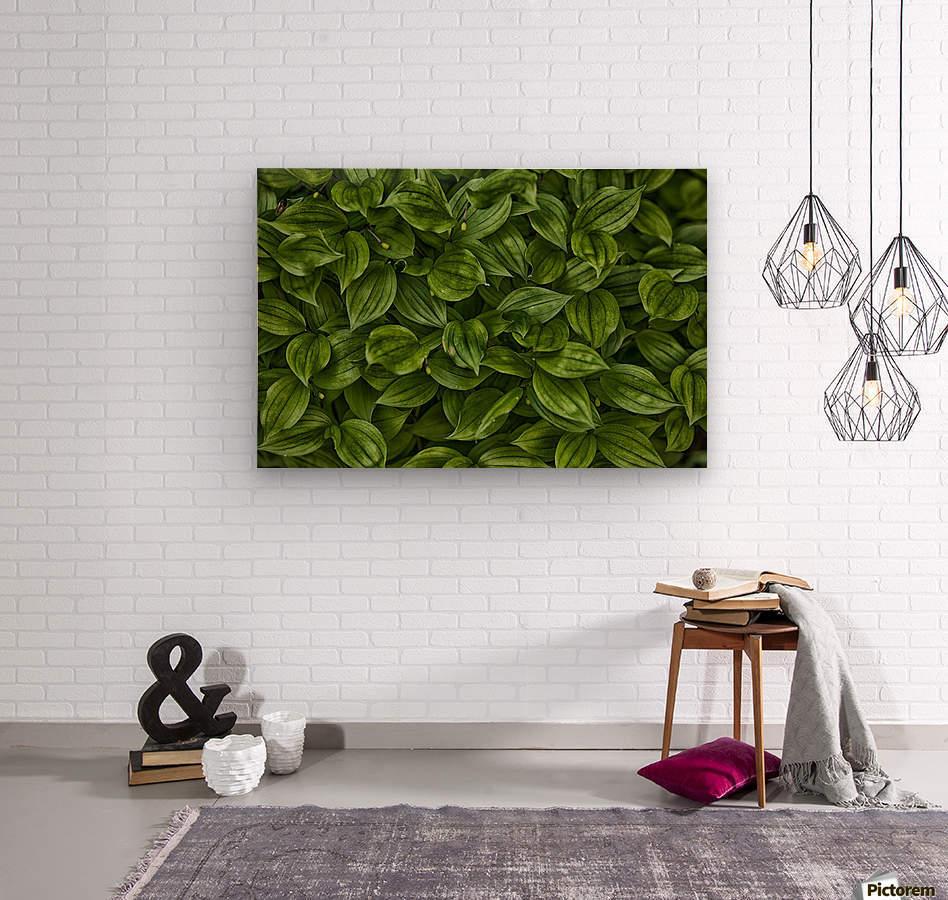 Hosta  Wood print