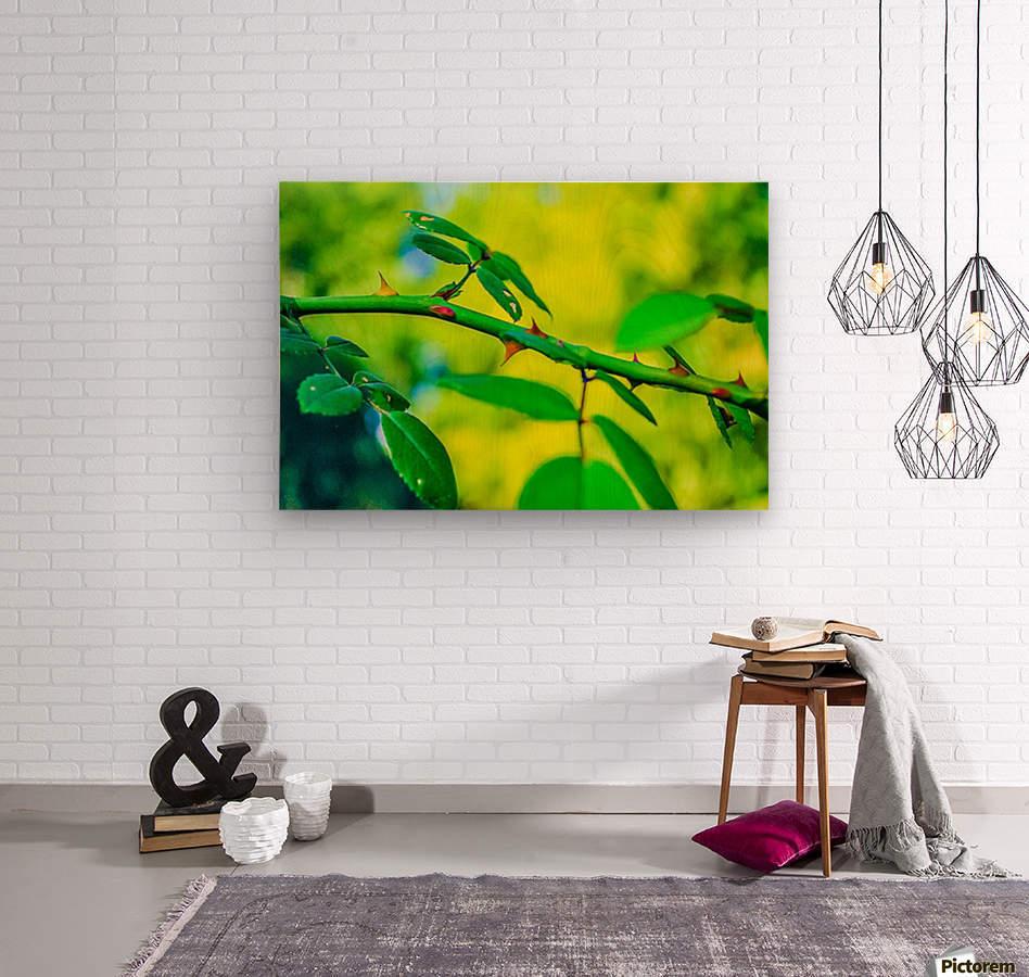 MHPBartlettArboretum 10  Wood print