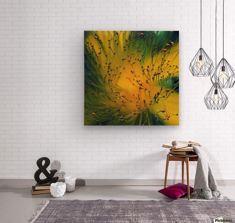 Creation  Wood print