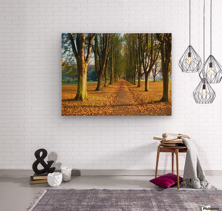 Autumnal Avenue  Wood print