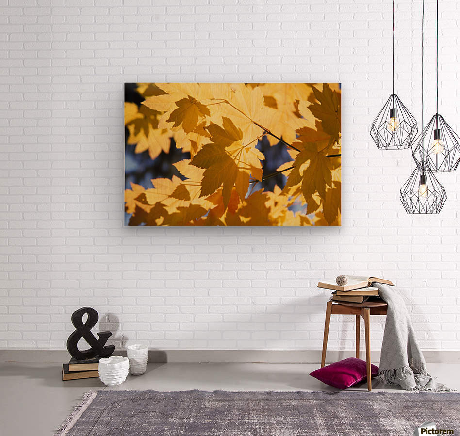 Vine Maples Leaves In Autumn  Wood print