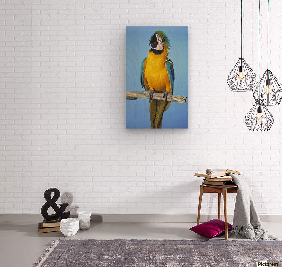 Blue-And-Gold Macaw  Wood print