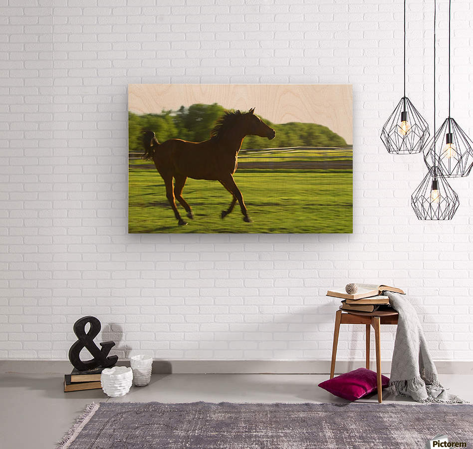 Horse Galloping  Wood print