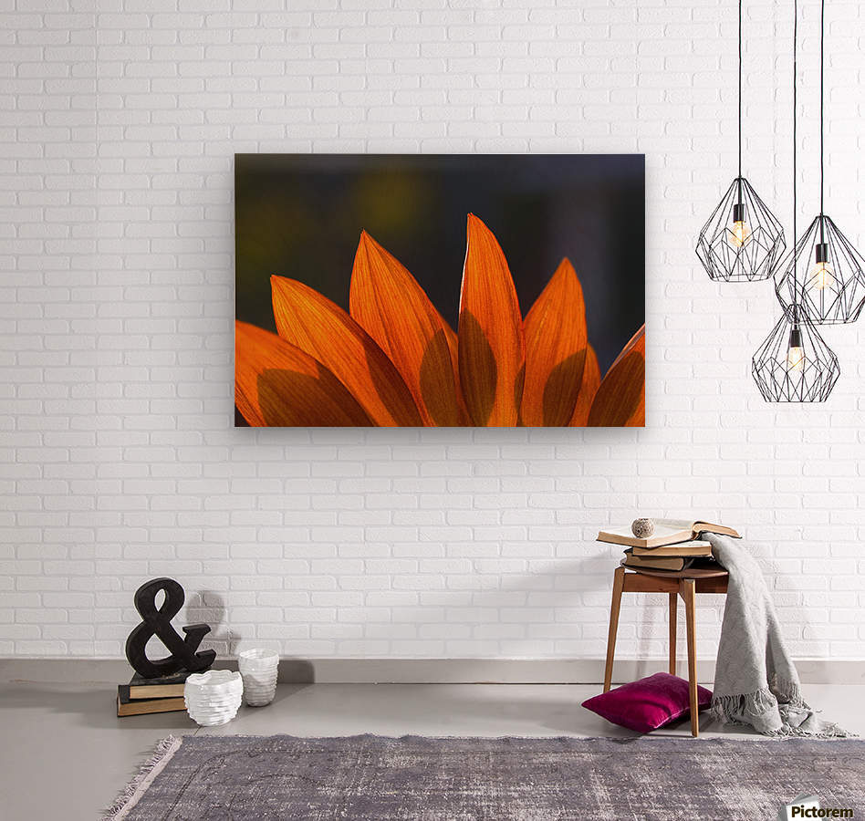 Sunflower Close-Up  Wood print