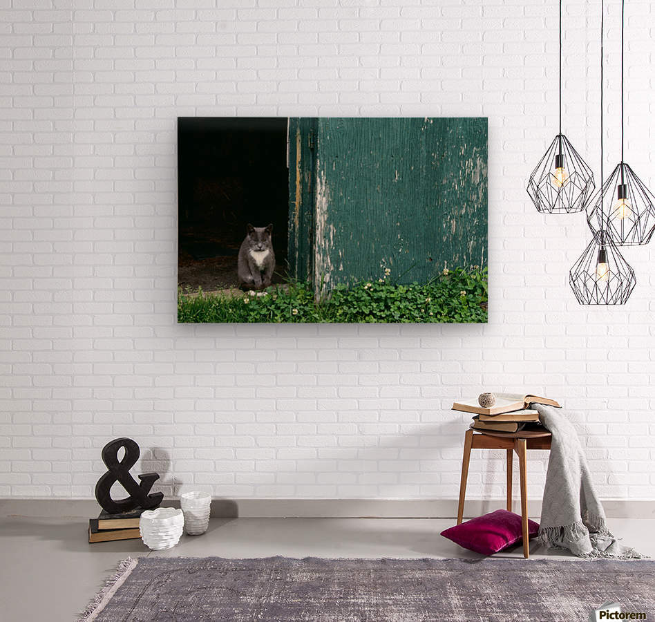 Cat In A Doorway  Wood print