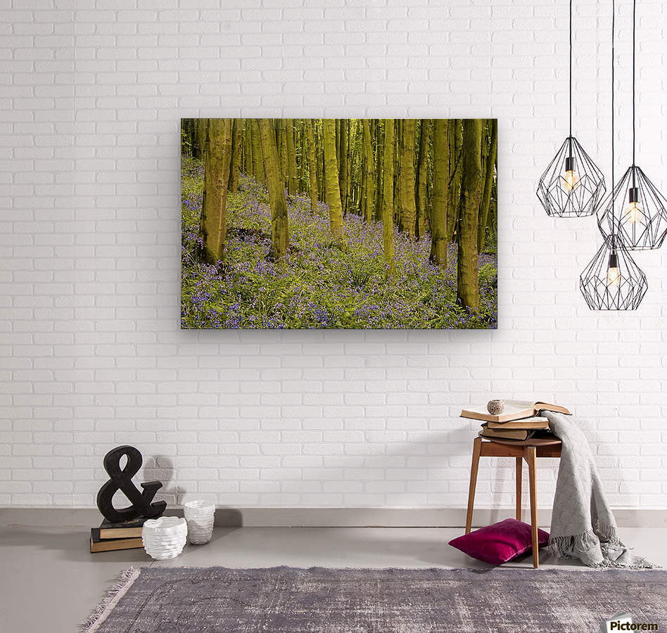 Bluebell Wood Impression  Wood print