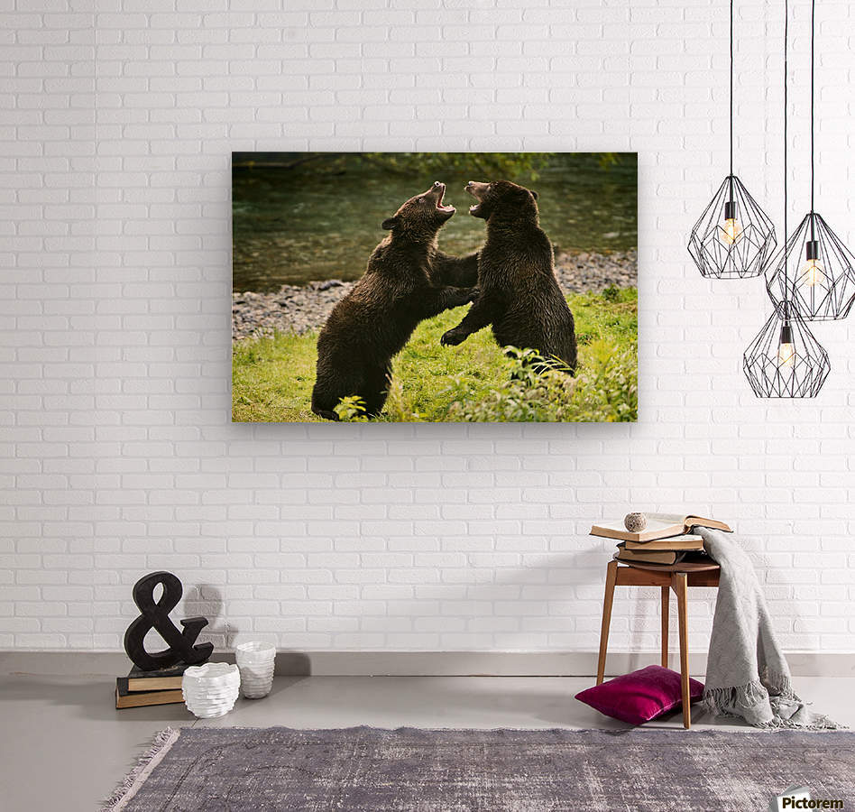 Two Grizzly Bears Fighting  Wood print
