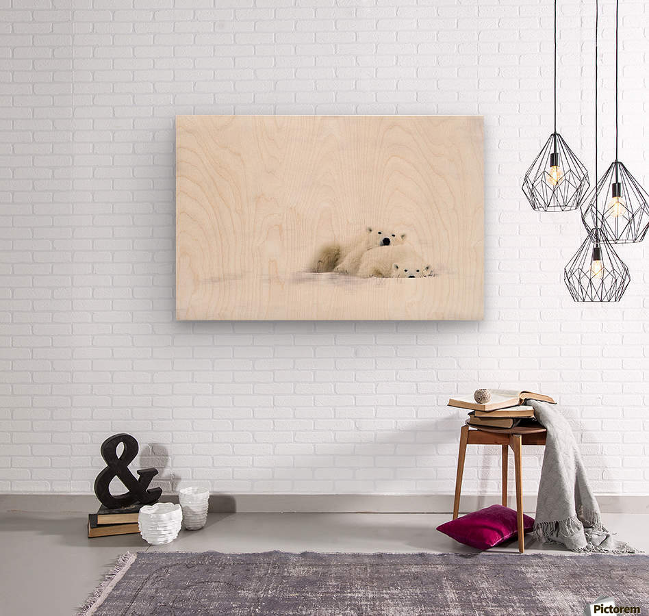 Two Polar Bears Snuggling  Wood print