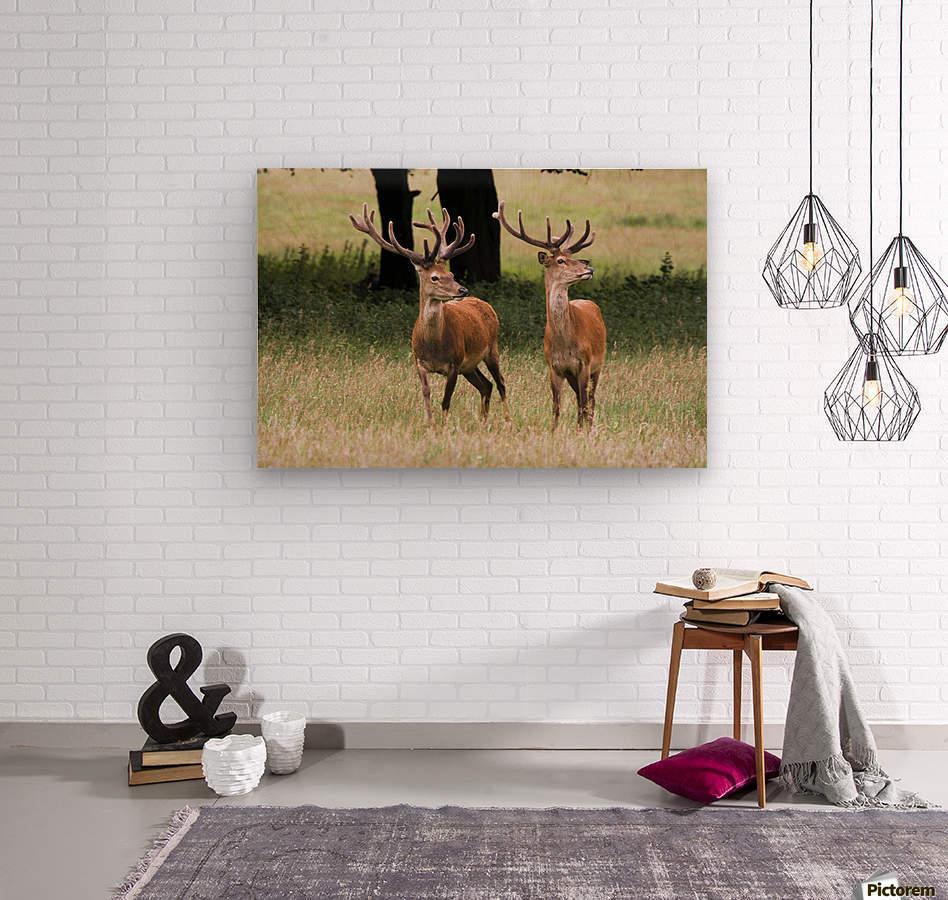 Elk In The Wild  Wood print