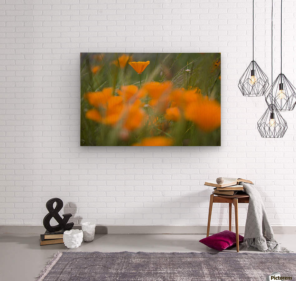 Close Up Of Orange Poppy Flowers  Wood print