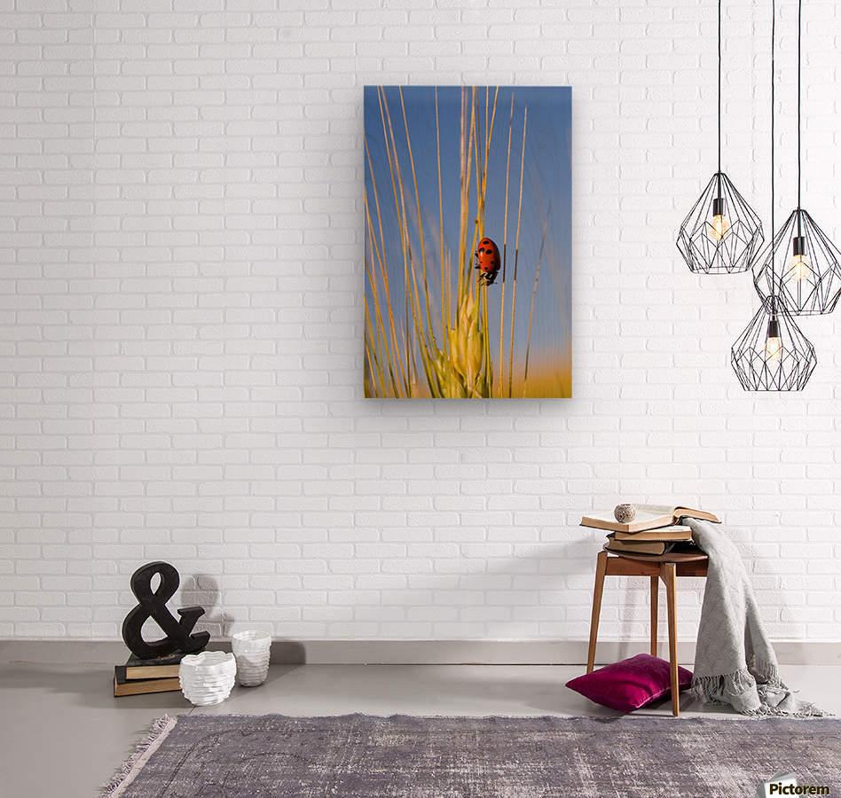 Lady Bug On A Plant  Wood print