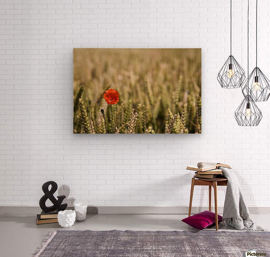 Poppy Flower In Field Of Wheat  Wood print