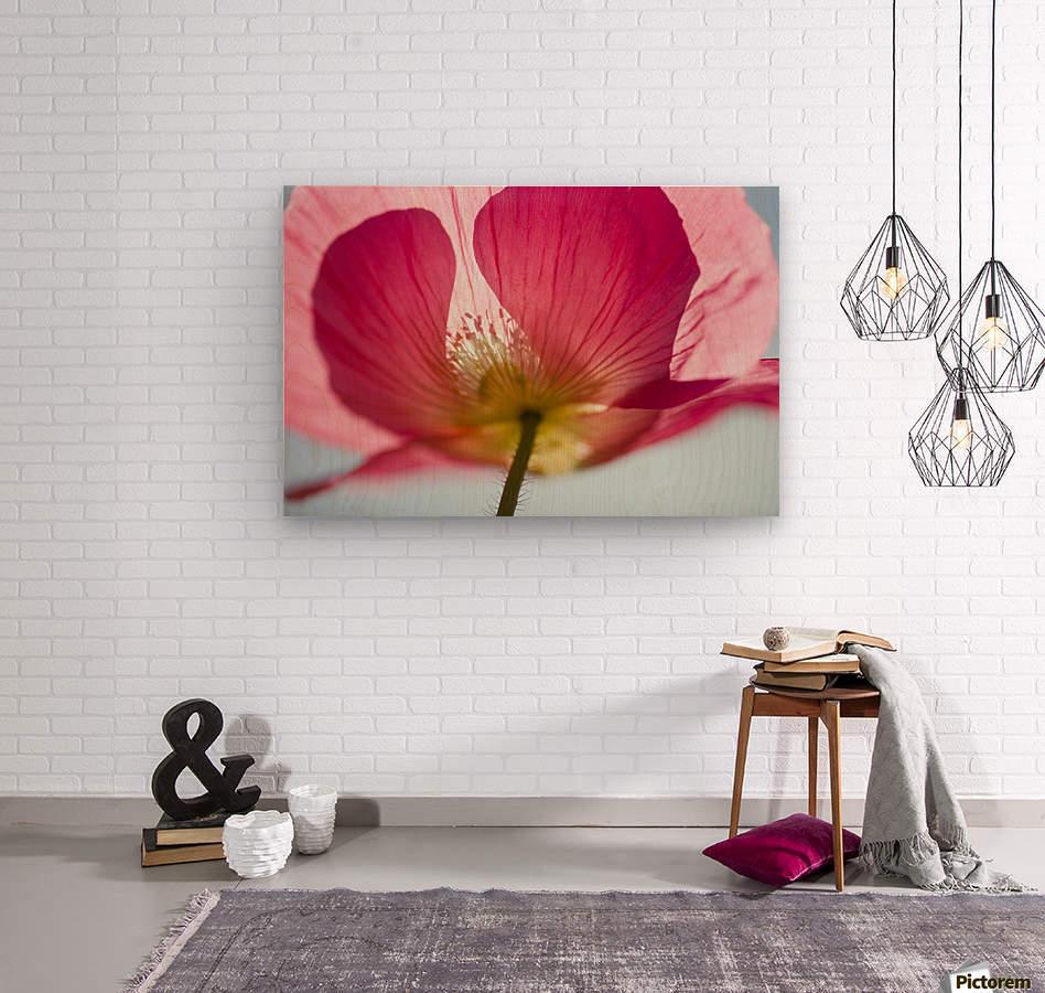 Pink Shirley Poppy  Wood print
