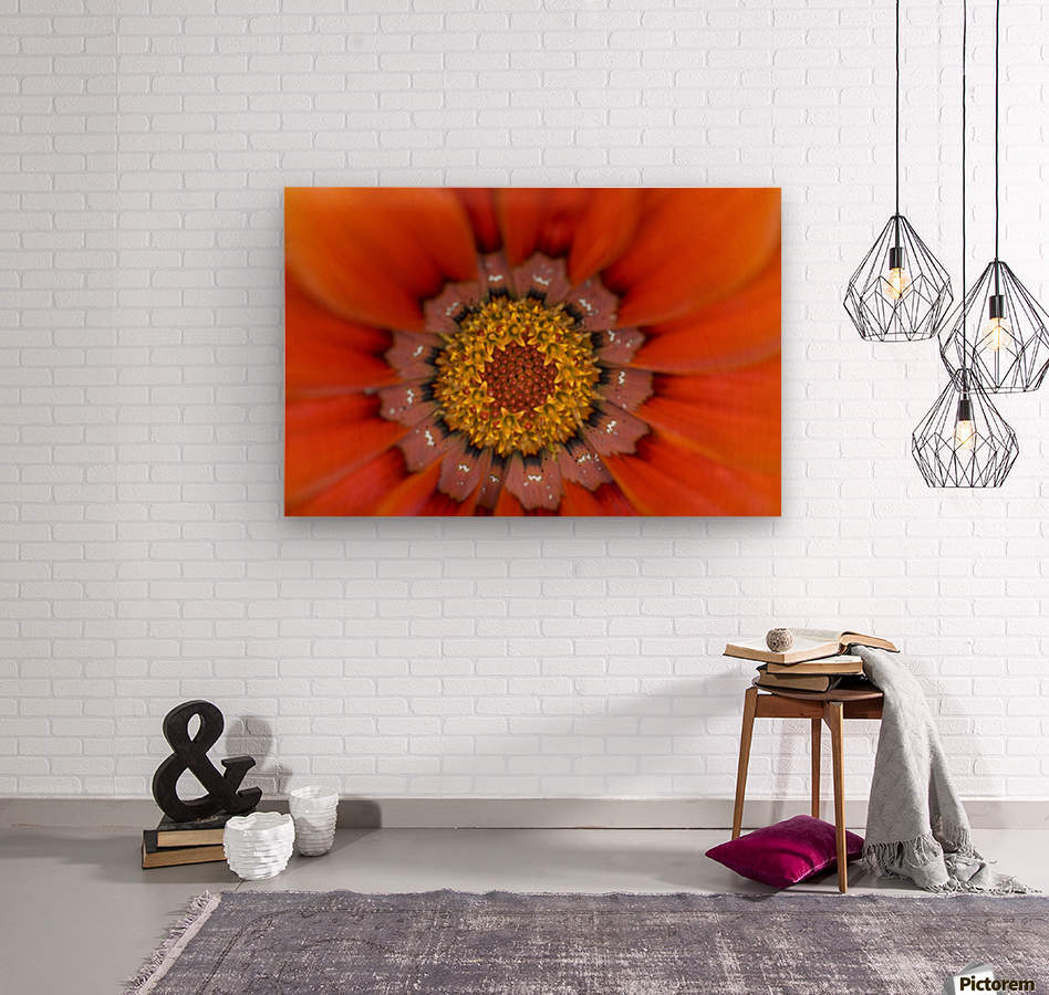 Lake Of The Woods, Ontario, Canada; Colourful Flowers In Bloom  Wood print