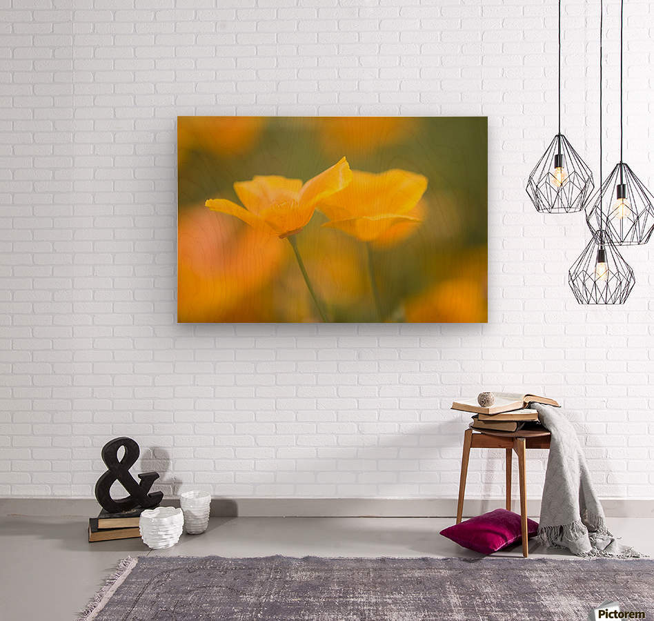 Yellow Poppy Flower, Mount Hood, Oregon, Usa  Wood print