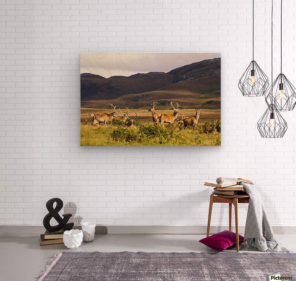 Island Of Islay, Scotland; Male Deer Roaming The Hills  Wood print