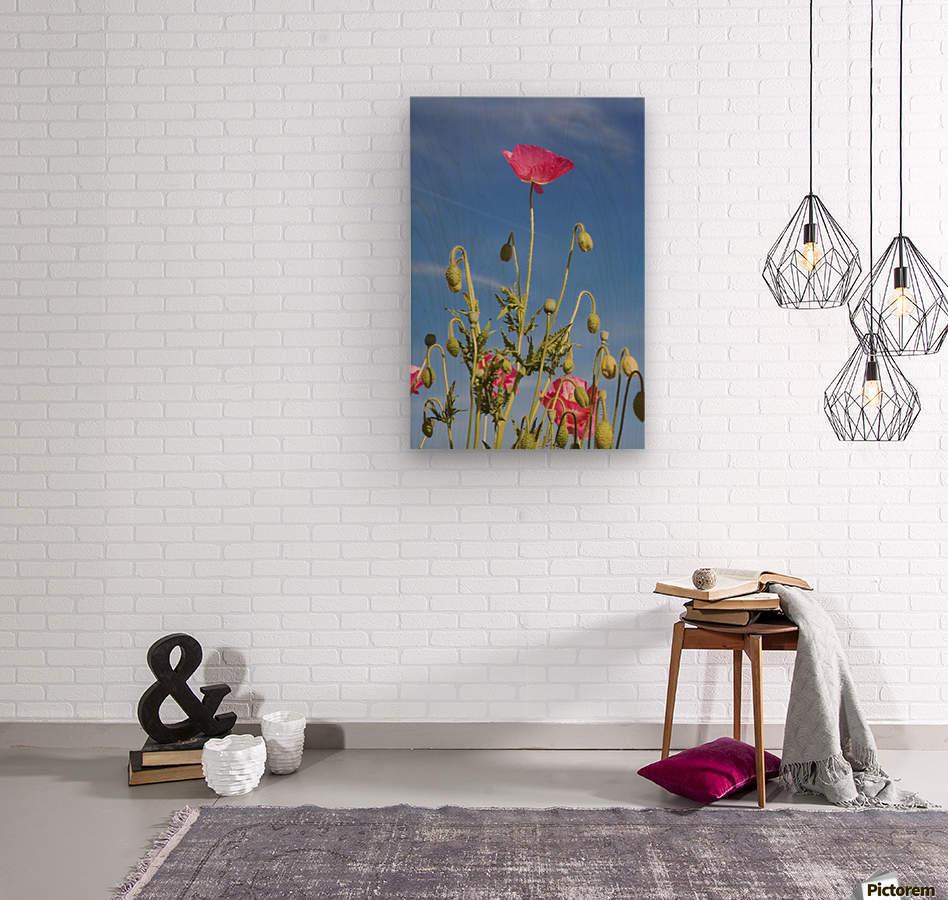 Red Flower Against Blue Sky  Wood print