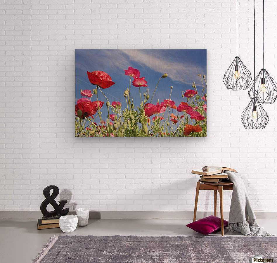 Red Flowers Against Blue Sky  Wood print