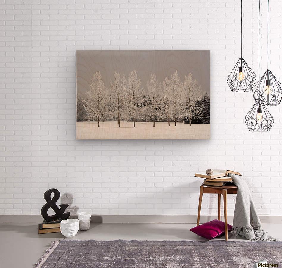 Winter, Calgary, Alberta, Canada  Wood print