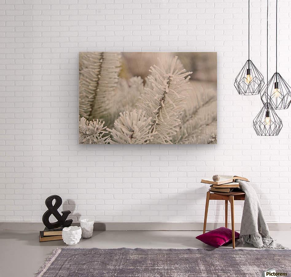 Frost On Pine Tree  Wood print