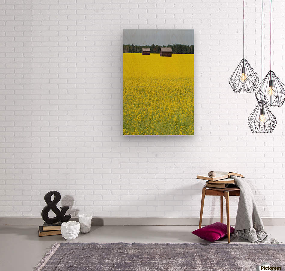 Alberta, Canada; Two Wooden Shacks In A Canola Field  Wood print