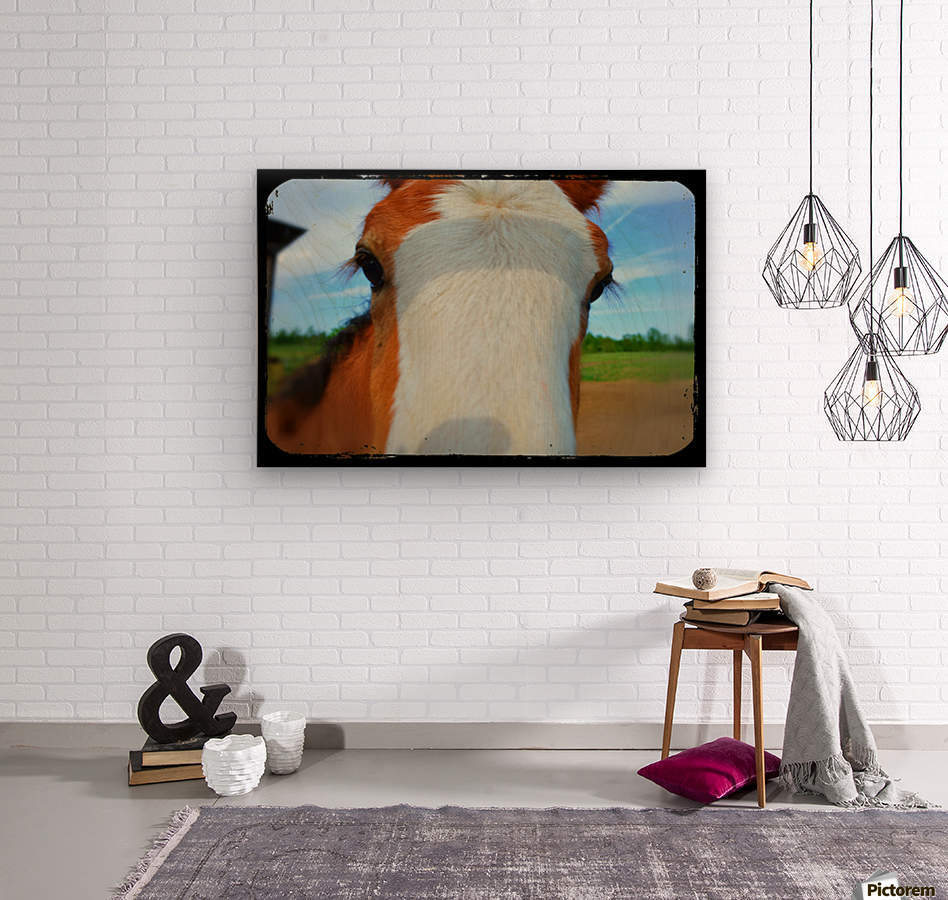 Baby Clydesdale  Wood print