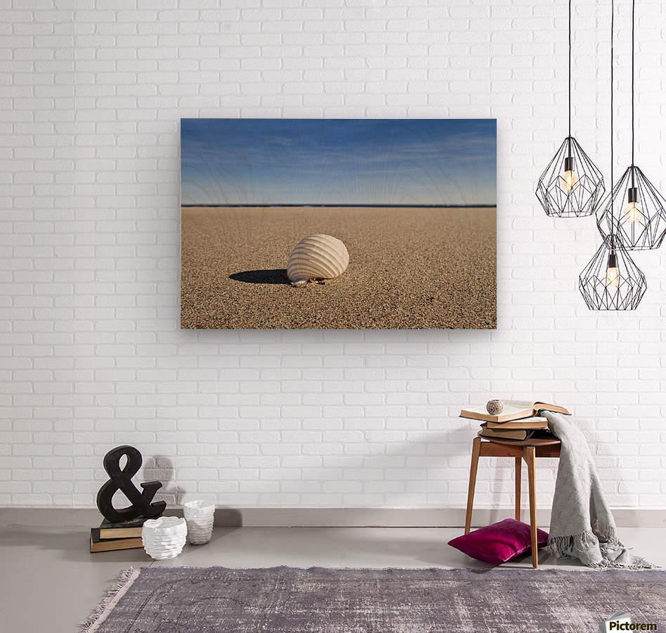 Northumberland, England; A Seashell On The Sand On Low Newton Beach  Wood print