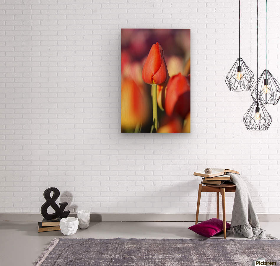 Woodburn, Oregon, United States Of America; Close Up Of A Closed Tulip  Wood print