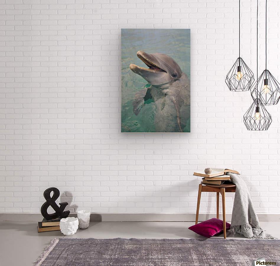 Roatan, Bay Islands, Honduras; A Bottlenose Dolphin (Tursiops Truncatus) In The Water At Anthony's Key Resort  Wood print