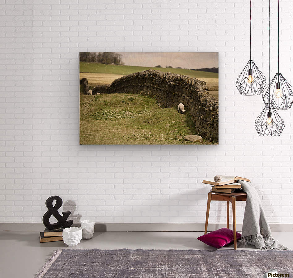 Northumberland, England; Sheep Grazing Along A Stone Wall  Wood print